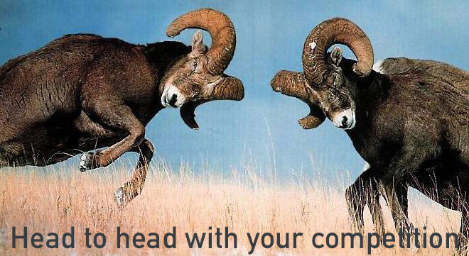 head to head competition between goats