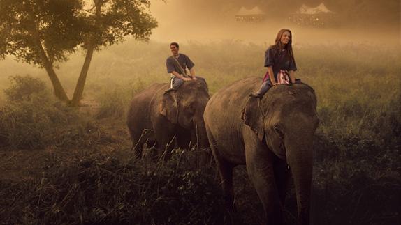 elephant activity